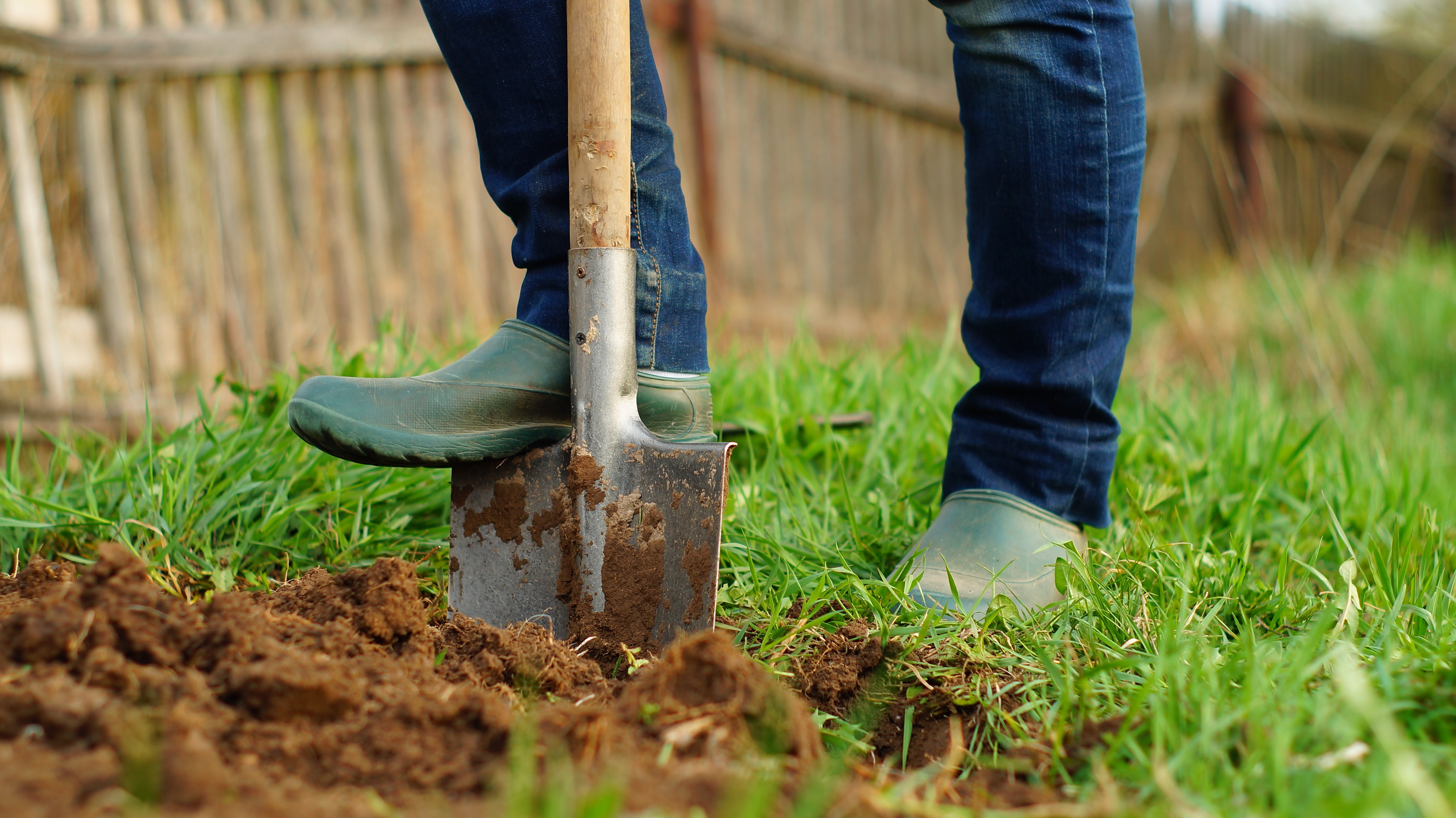 woman digging the ground at her garden using a spade