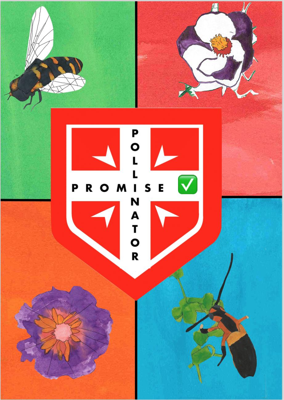 Polli Promise