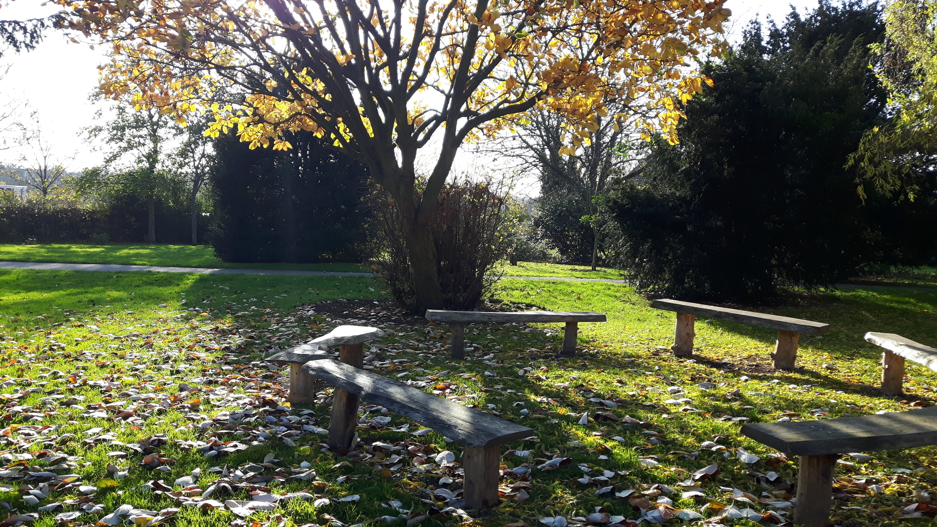 The bench area in autumn