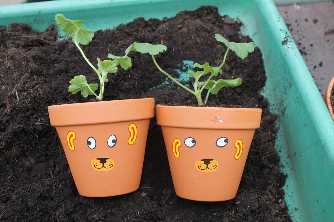 funny face geraniums 2 (1)