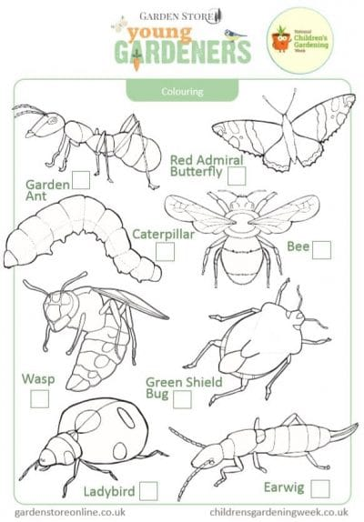 mini beasts activity
