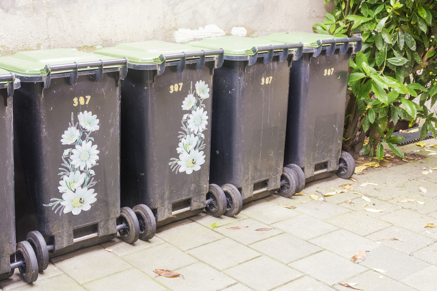 Row of garbage containers, some decorated to make them beautiful, in the city against an old cement wall. A green plant next to the containers as a natural element.