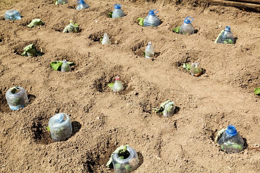 Seedlings growing in plastic bottles as small hotbeds