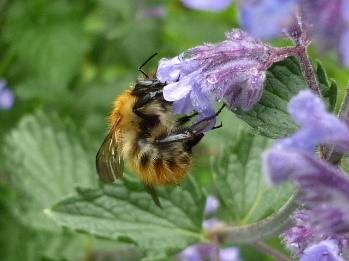 BEE GARDEN AGAIN 4
