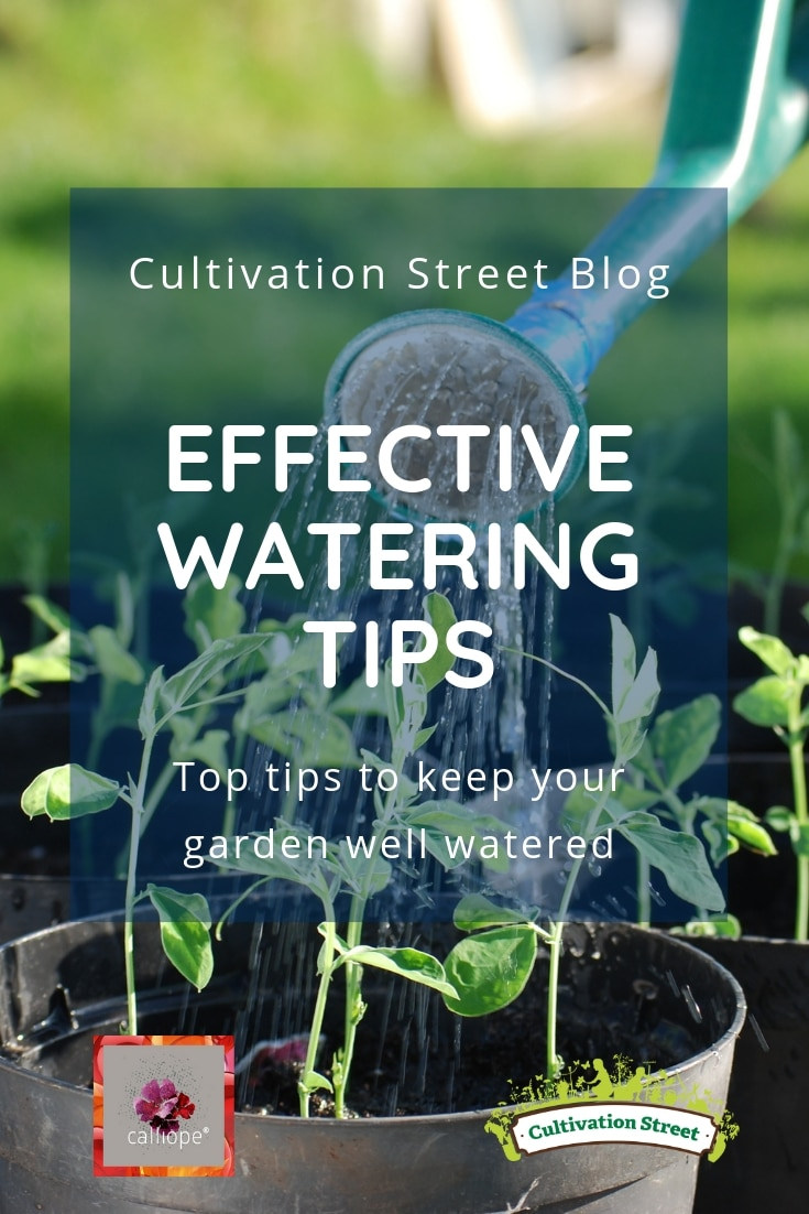 Cultivation Street Blog on effective watering, top tips to keep your school or community garden well watered. Part of our #CalliopeMyLife series of blogs