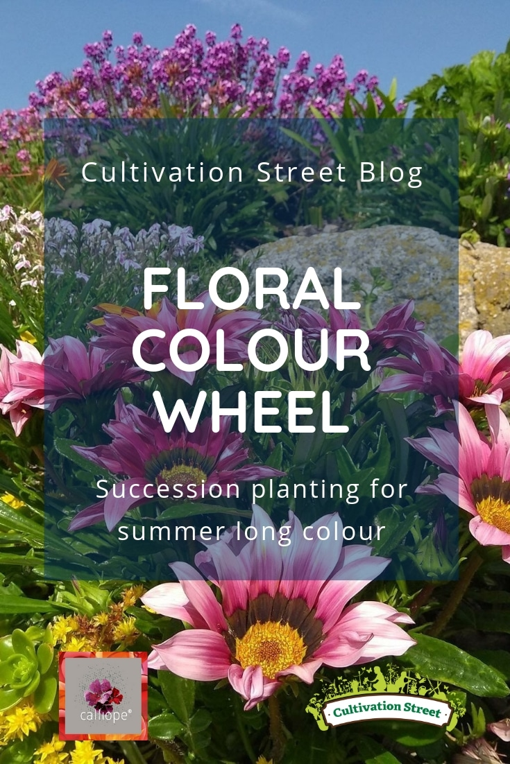 Cultivation Street Blog on succession planting, replenishing colours in the colour wheel to create summer long colour. Part of our CalliopeMyLife series of blogs