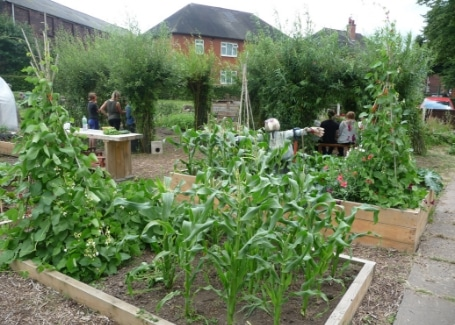Root 'n' Fruit Community Allotment raised bed growing sweetcorn and runner beans with a scarecrow to keep the birds away