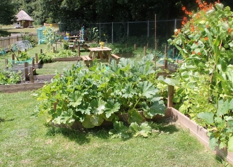 Midfield Primary School vegetable patch