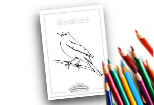 Blackbird Feature Image Colouring page Cultivation Street (1)