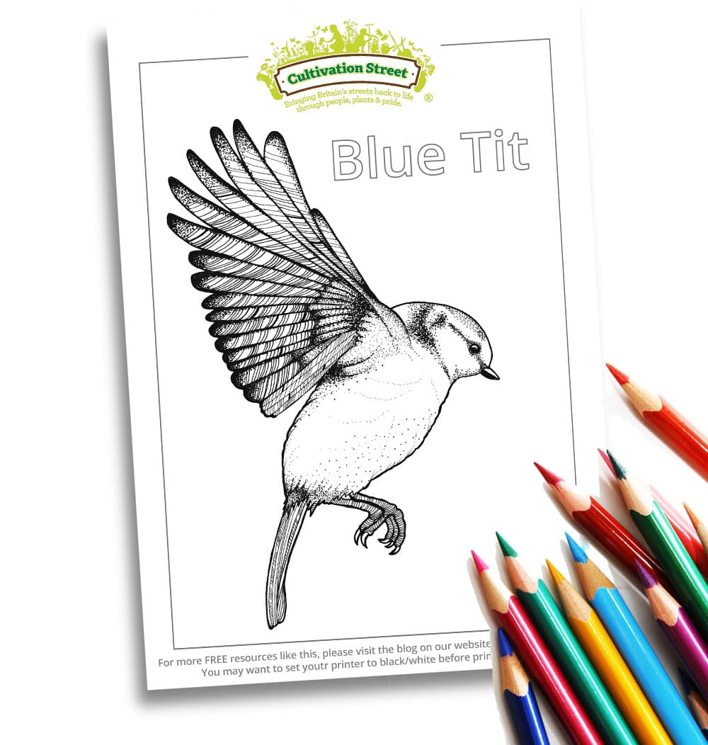 Blue Tit Garden-Bird-Colouring-Body-Image-Cultivation-Street