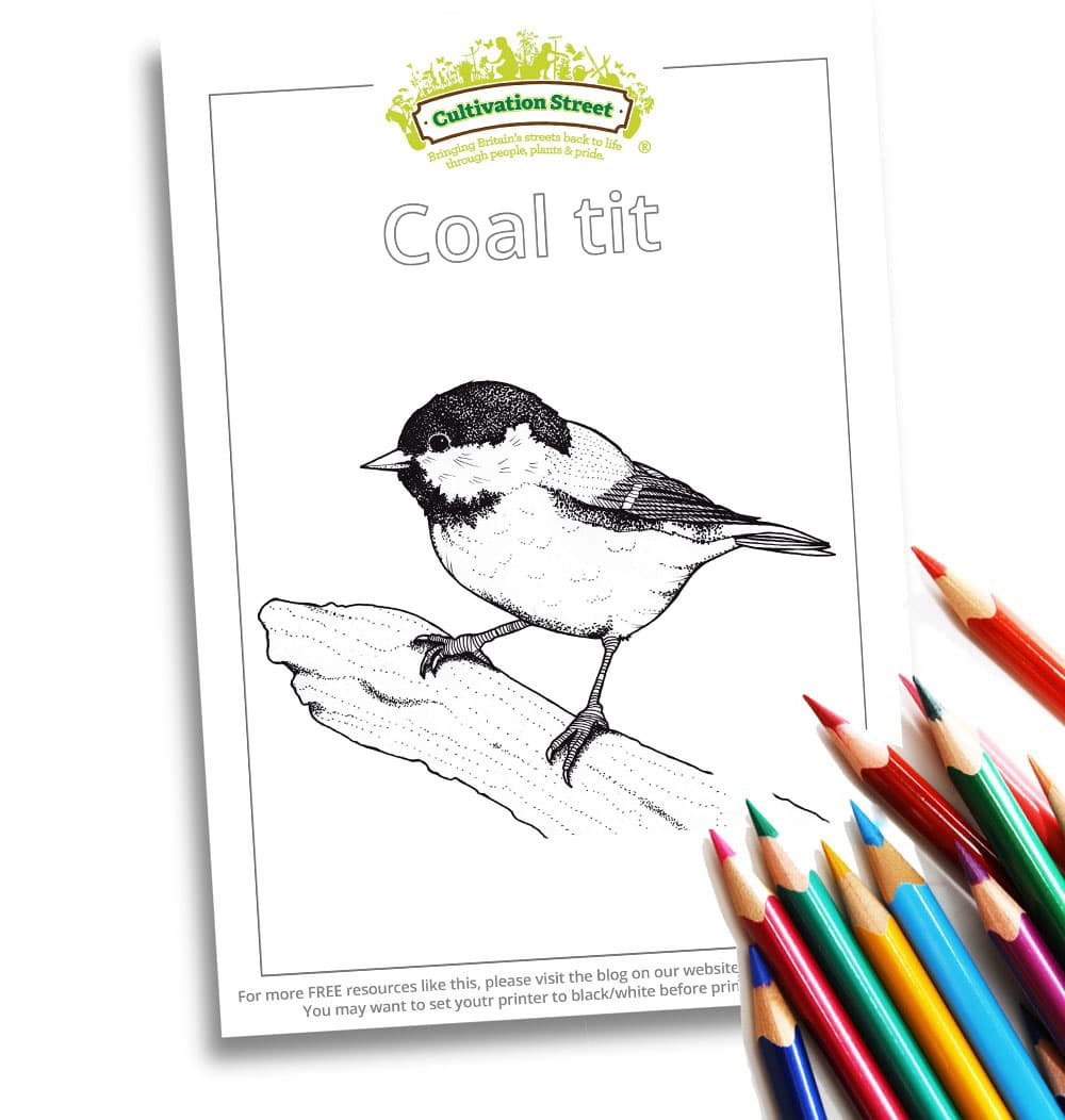 Coal Tit Body-Image- Colouring Page Cultivation-Street