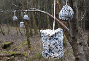 Feature Image How To Activity Bird Feeders Made Your Owen Cultivation street Hanging