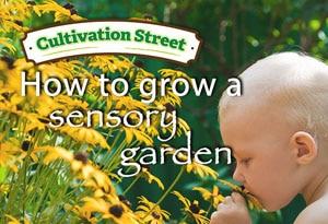 Feature Image Sensory Garden Cultivation street