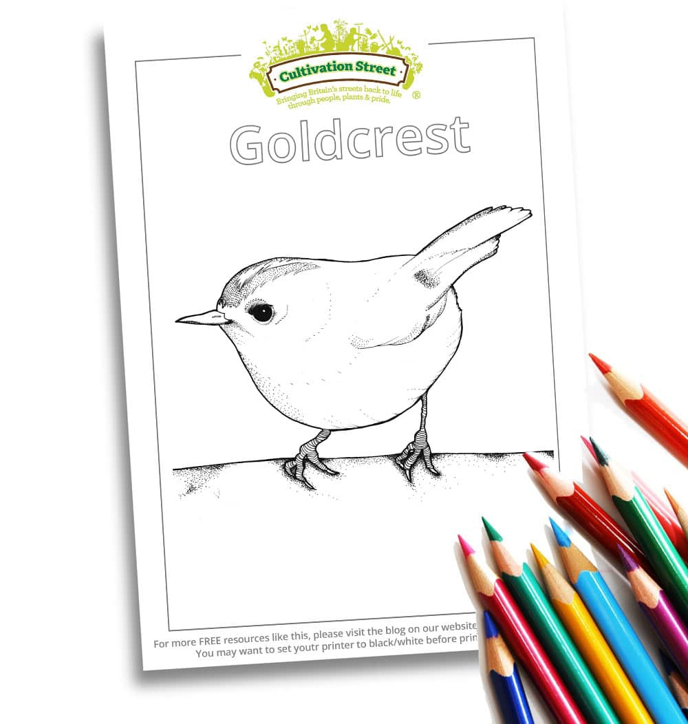 Goldcrest Body-Image- Colouring Page Cultivation-Street
