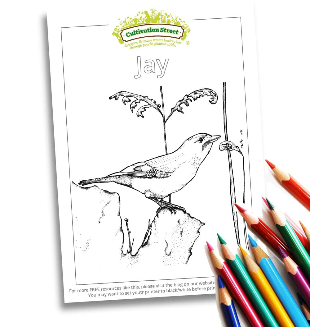 Jay Body-Image- Colouring Page Cultivation-Street