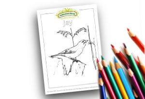 Jay Feature Image Colouring page Cultivation Street (1)