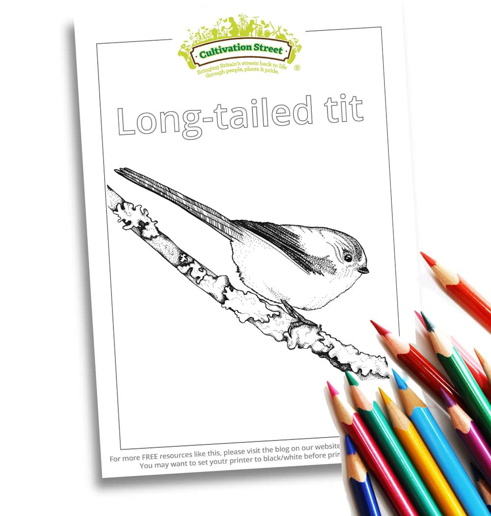 Long Tailed Tit Body-Image- Colouring Page Cultivation-Street