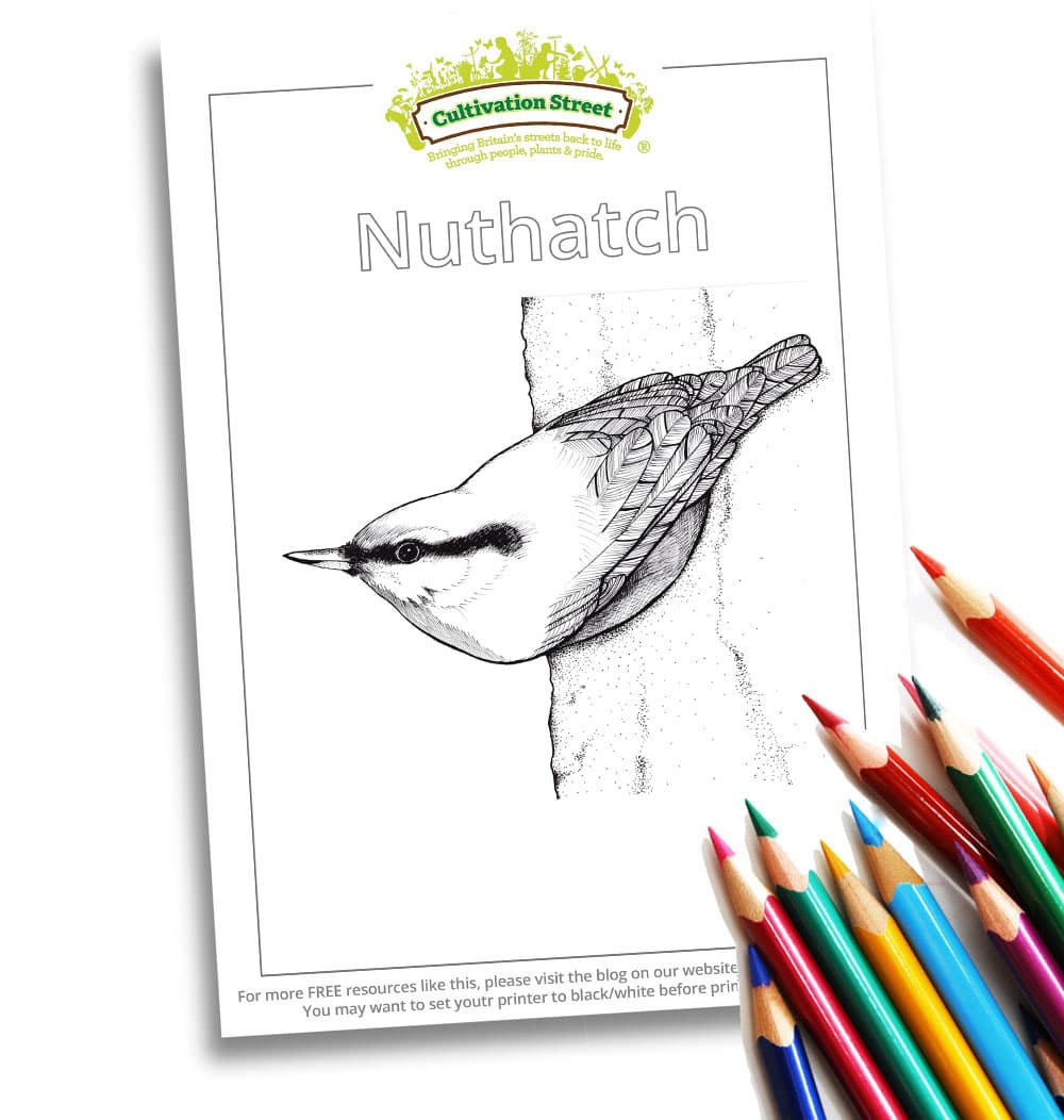 Nuthatch Body-Image- Colouring Page Cultivation-Street