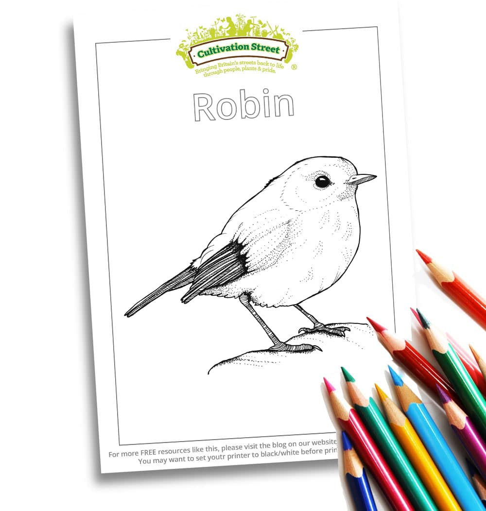 Robin Body-Image- Colouring Page Cultivation-Street