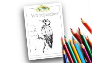Woodpecker Feature Image Colouring page Cultivation Street (1)