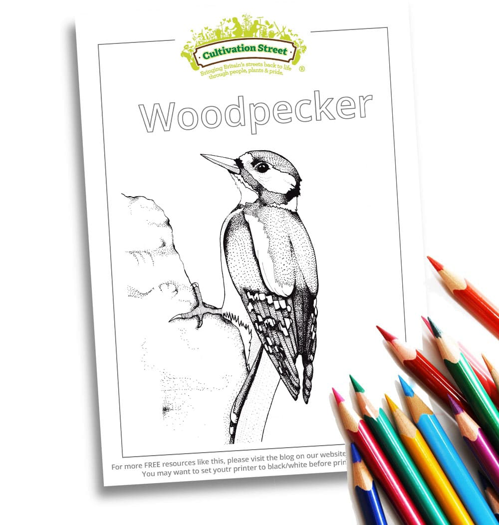 Woodpigeon Body-Image- Colouring Page Cultivation-Street