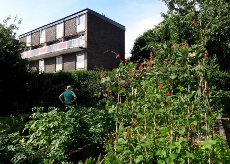 Tinsley Allotment, Shortlisted in the 2018 Cultivation Street Competition in Communities and Calliope Colour My Life