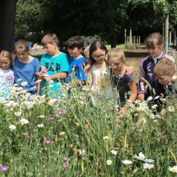 St Albans Primary School children enjoying the wild flowers in their Cultivation Street Garden