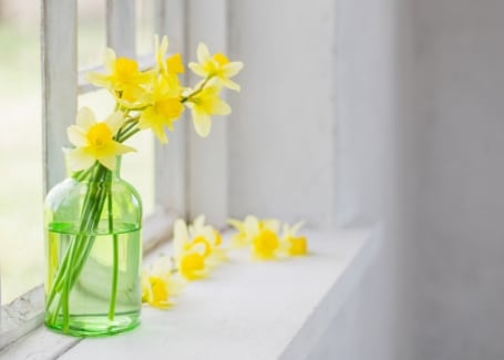 Cultivation Street Plant of the month Daffodils cut flowers
