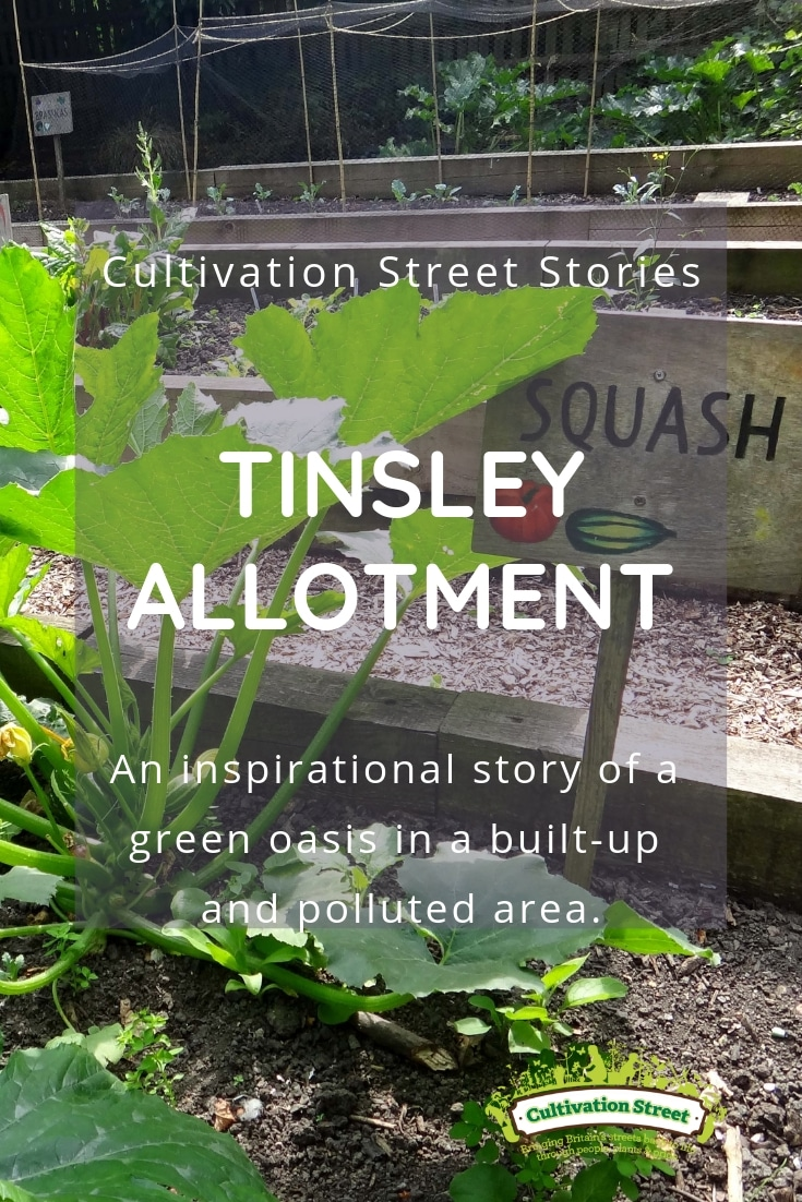 Cultivation Street Story Tinsley Allotment An inspirational story of a green oasis in a built-up and polluted area