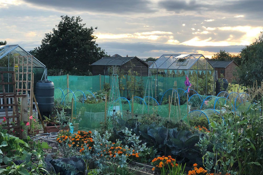 S2S garden at dusk2
