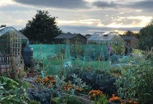 Shoulder to Soldier, a Cultivation Street community garden