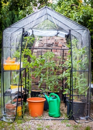 Using a small greenhouse in a Cultivation Street school or community garden