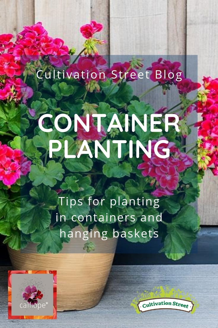 Cultivation Street Blog with Calliope Flowers, tips for planting in containers and hanging baskets
