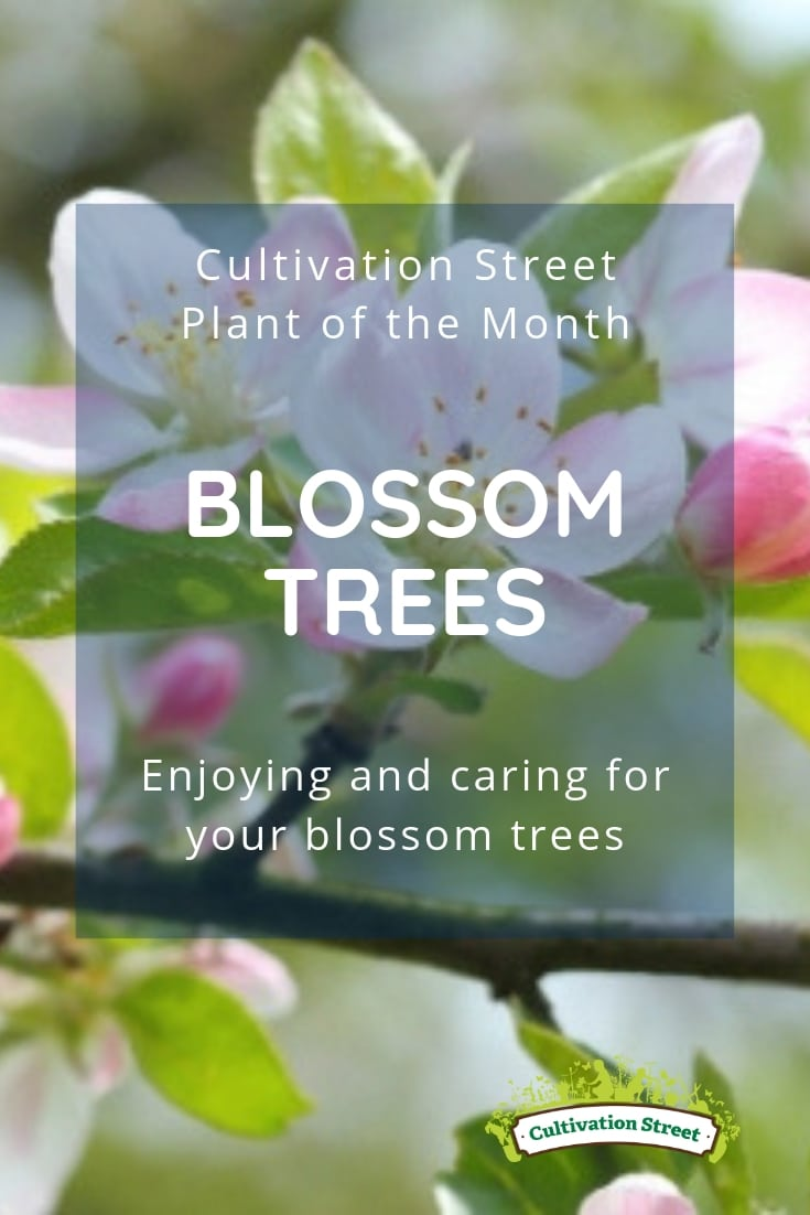 Cultivation Street Plant of the Month, Blossom Trees, Enjoying and caring for your blossom trees