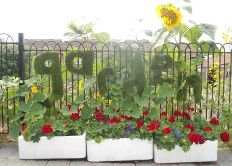 Cultivation Street Story of Springhallow School Garden's Calliope Colour My Life display in the 2018 Cultivation Street competition