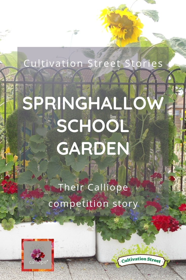Cultivation Street Story of Springhallow School Garden's Calliope Colour My Life entry in the 2018 Cultivation Street competition