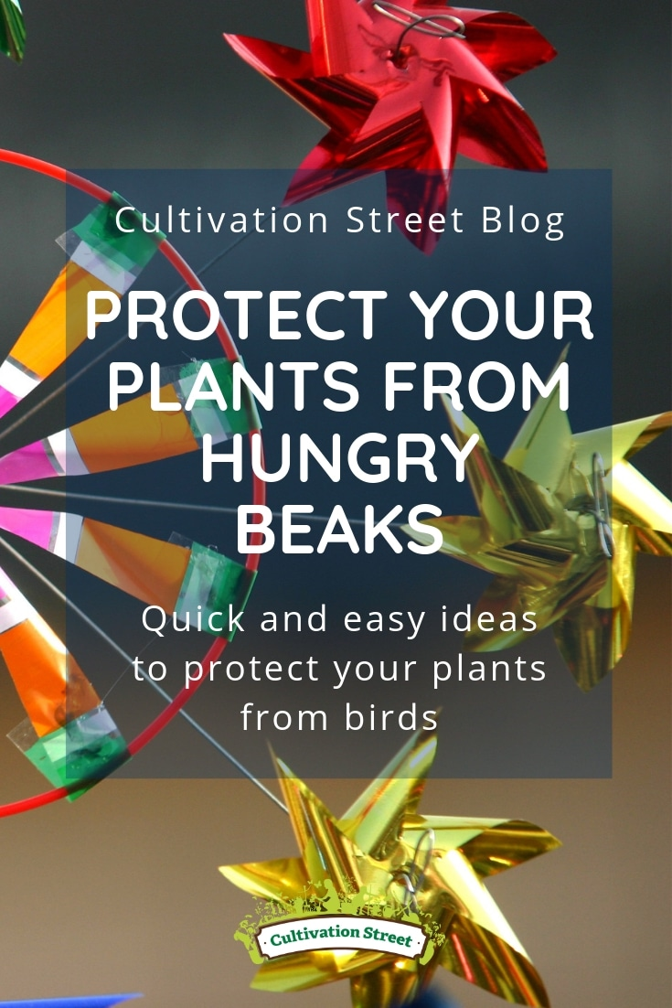 Cultivation Street advice for your school or community garden to protect young plants being eaten by birds