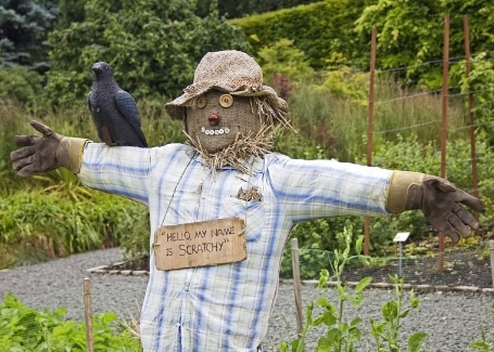 Cultivation Street advice making a scarecrow in your garden to scare the birds away