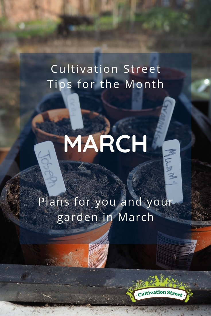 Cultivation Street tips for the month of March, plans for you and your garden in March including sowing seeds, planting potatoes, planning & spring cleaning your bug hotel