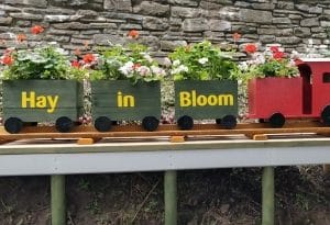 Haytown in Bloom Cultivation Street Calliope competition entry