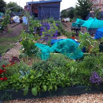 Includeme2 Allotment Angels Cultivation Street garden's raised beds