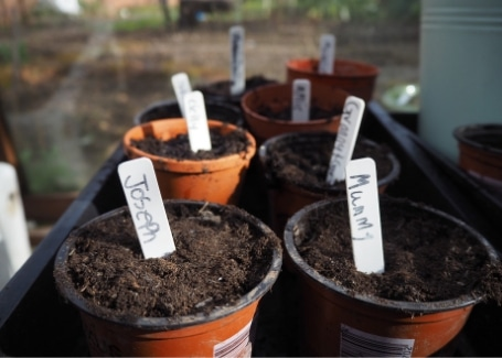 Sowing seeds in greenhouses or on windowsills