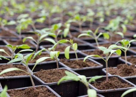 Cultivation Street tips for May blog, plant or seed swaps