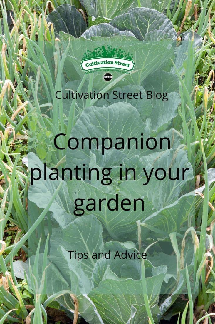 CultivationStreet Blog (10)