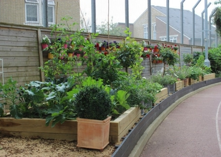 Hammersmith Academy Cultivation Street garden raised beds and climbers