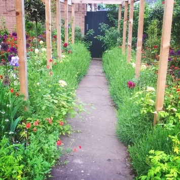 Pergola Close Oasis, the story of their small space garden