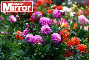 Behinf the Sunday Mirror Blog Post feature image Wonky Garden