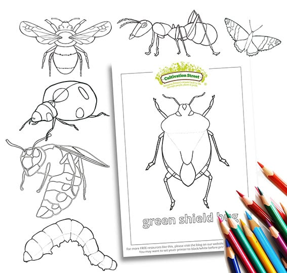 Bug colouring pages Body-Image- Colouring Page Cultivation-Street