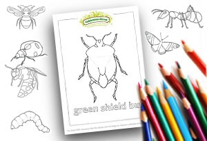 Bug colouring pages resources feature-Image- Colouring Page Cultivation-Street