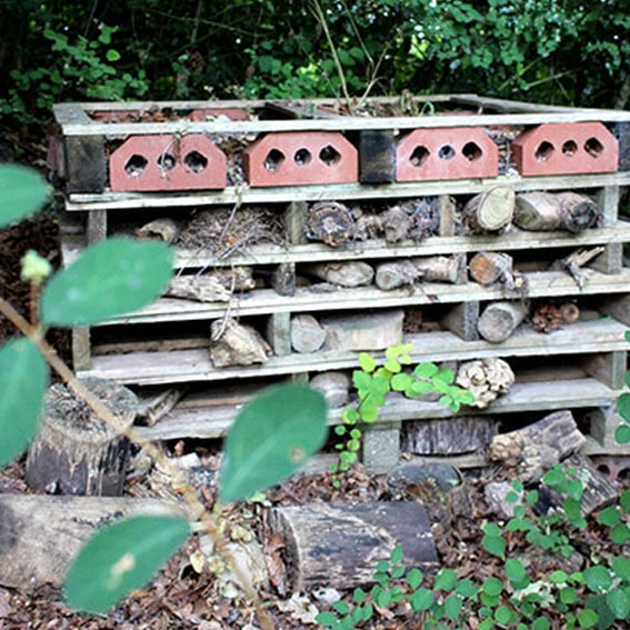Bug hotel activity cultivation street community school gardens network images 3